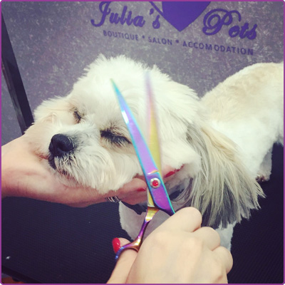 julia-pets-salon-de-infrumusetare-animale-poza-3